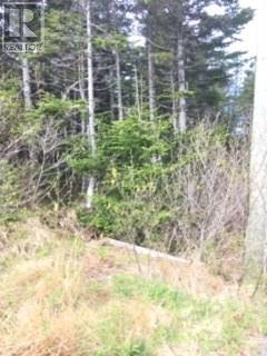 1197496, Lot 16 Rhodie`s Pond Road, Placentia Junction